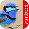 Bird Song Id Australia - Automatic Recognition - $4.99
