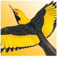 Morcombe and Stewart Birds of Australia - Free lite version
